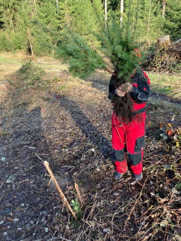 Bäumchen pflanzen, Baumpatenschaft