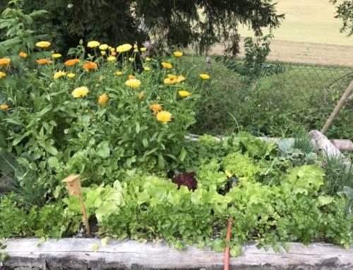 Fruchtfolge und Garten-Jahr vorplanen im Januar