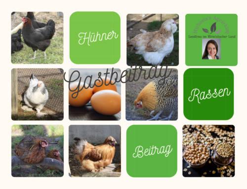 Hühnerrasse – mit der richtigen Wahl zum Erfolg  Eier, Fleisch und Küken? Keine Rasse kann alles!