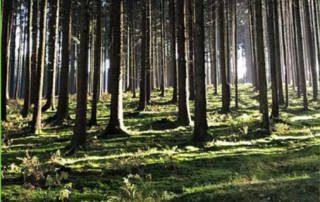 Baumpatenschaft