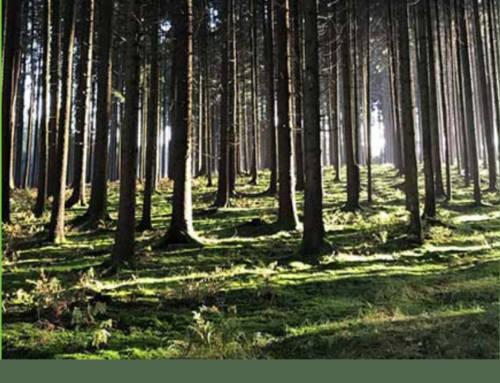 Baumpatenschaft im Herzen Bayern