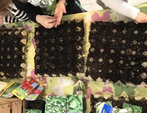 Gemüsesamen und Samenauswahl: Wie komme ich zu guten Jungpflanzen?
