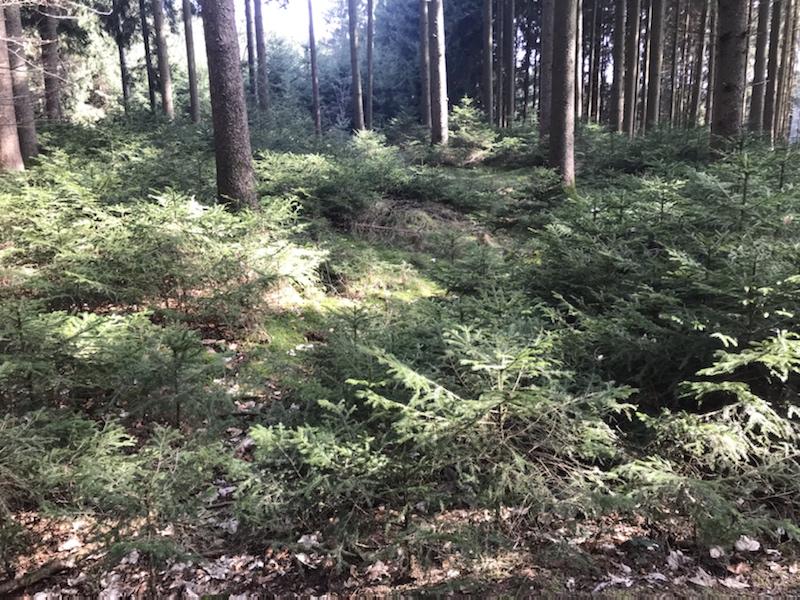 Wald badeb