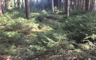 Waldbaden; Meditation im Wald