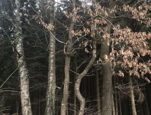 Arbeitssicherheit-und-Gesundheitsschutz im Wald
