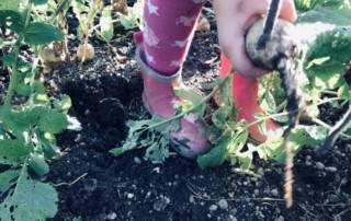 Gemüse ansäen und ernten