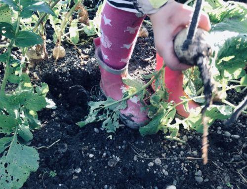 Gemüse-ansäen: Wie du mit Kindern im Februar schon Gemüse vorziehst und ein paar Tipps