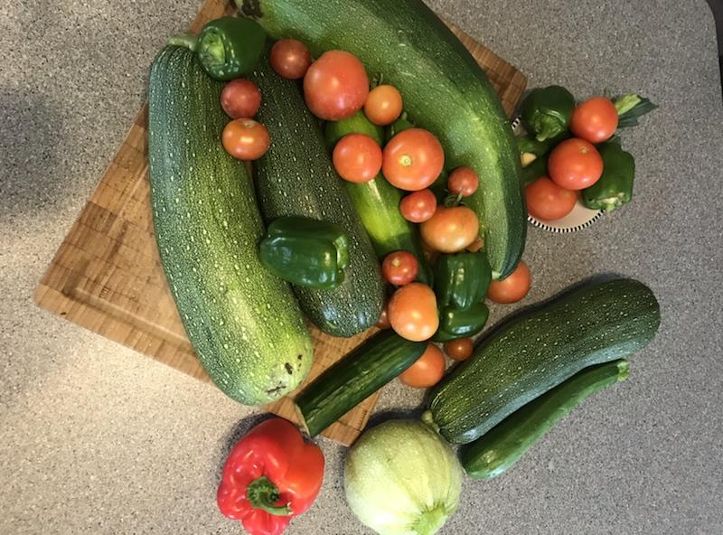 Zucchini mit Brennnesseljauche gedüngt